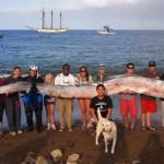 Evazivul peşte – vâslă a fost filmat recent de turişti