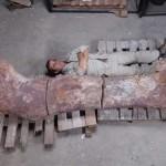 """""""Cel mai mare dinozaur"""" a fost descoperit în Patagonia"""