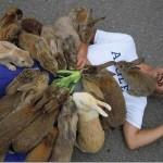 Okunoshima – insula iepurilor