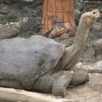 Animale disparute - Testoasa de pe insula Pinta, 2012