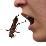 Pestaurant – primul restaurant din lume unde se servesc insecte în ciocolată