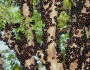 Poza zilei - Fructul exotic Jabuticaba