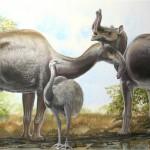 Misterul mamiferelor ciudate din America de Sud a fost rezolvat