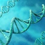 Eliminarea anumitor gene ar putea creşte durata vieţii cu 60 la sută