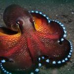 39 cele mai ciudate  curiozităţi despre peşti şi alte creaturi din ocean