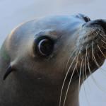 10 animale adorabile pe cale de dispariţie din cauza schimbărilor climaterice