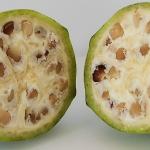 Iată cum arătau fructele şi legumele înainte de a fi domesticite