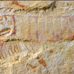 A fost găsit un sistem nervos preistoric de 520 de milioane de ani