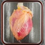 Inimă care se zbate, a fost pentru prima dată crescută în laborator folosind celule stem