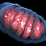 eucariote fără mitocondrii