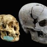 Cercetătorii au descoperit rămăşiţele unui strămoş 'hobbit'