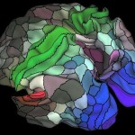 Oamenii de ştiinţă au identificat 97 de regiuni noi în creierul nostru