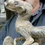 Rămăşiţe mumificate a unei creaturi misterioase au fost găsite în Iacutia