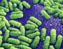 Bacterii rezistente la antibiotici