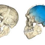 Cele mai vechi fosile Homo sapiens au fost descoperite în Maroc