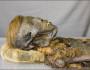 mumie-cu-par-roscat