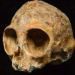 A fost descoperit un uimitor craniu de maimuţă antropoidă vechi de 13 milioane de ani