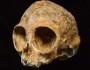 craniu-vechi-de-maimuta-antropoida