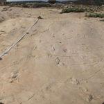 Aceste urme de picioare fosile pun la îndoială teoriile evoluţiei înrădăcinate