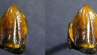 """""""Ar putea oare rescrie istoria umană"""" noile fosile de dinţi preistorici găsiţi în Germania?"""