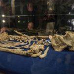 Australopithecus prometheus