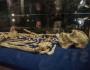 Un strămoş uman vechi de 3,6 milioane de de ani a fost prezentat publicului larg