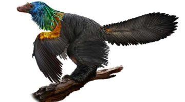 Cai hong juji dinozaur cu penaj irizat