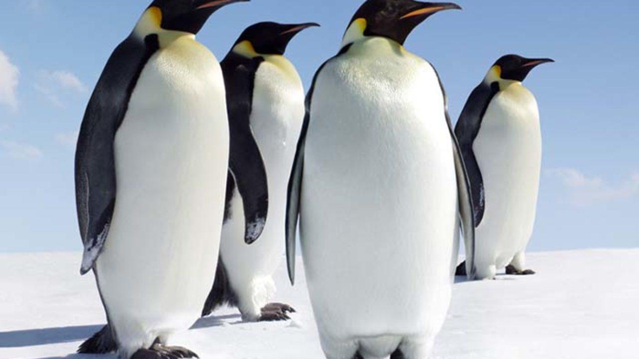 23 Animale Din Antarctica şi Polul Sud Inborş