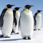 animale din Antarctica