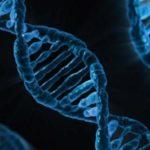 Transferul genelor printre specii a accelerat evoluţia
