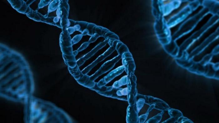 Transferul genelor printre specii