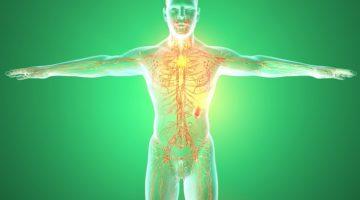 Nou micro-organism în corpul uman