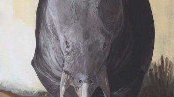 Lisowicia bojani - predecesor al mamiferelor