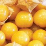 Fructul groundcherry — genetic modificat