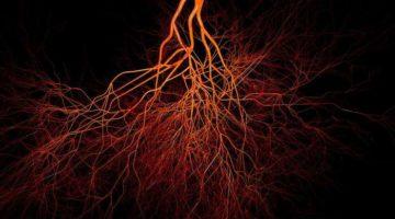 Tip nou de vase sanguine