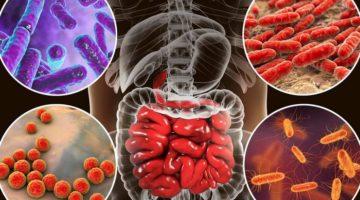 Rolul bacteriilor în sănătatea umană