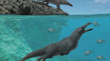 Peregocetus pacificus - strămoş al balenei