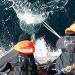 200 000 de viruşi noi descoperiţi în ocean