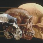 Evoluţia feţei umane