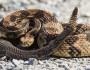 11 Cei mai veninoşi şi periculoşi şerpi din lume