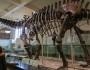 Titanosaurus: cel mai mare animal care a călcat vreodată pe Pământ
