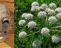 15 curiozităţi despre plante şi ciudăţenii mai puţin cunoscute